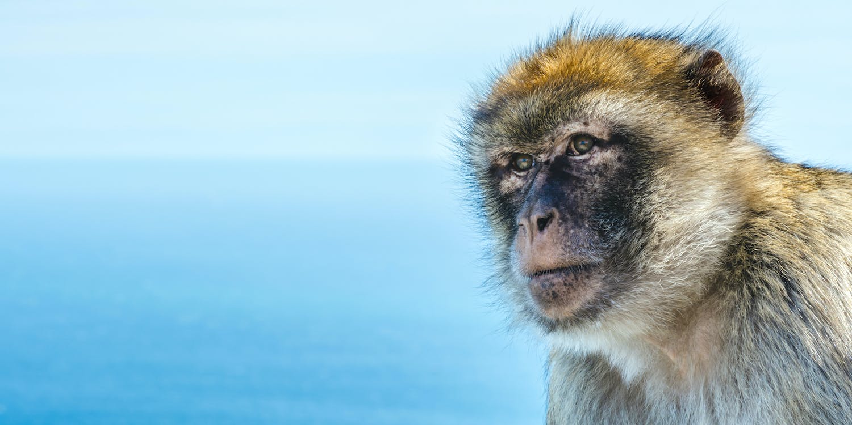 Monkey teeth fossils hint several extinct species crossed the Atlantic - The Conversation UK