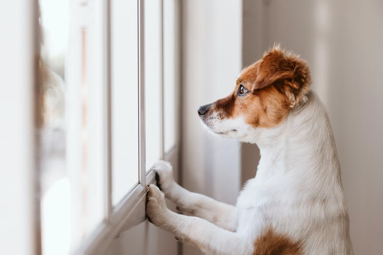 Abuse and abandonment: why pets are at risk during this pandemic