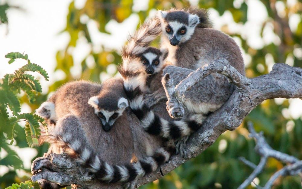 Nature's comeback? No, the coronavirus pandemic threatens the world's wildlife