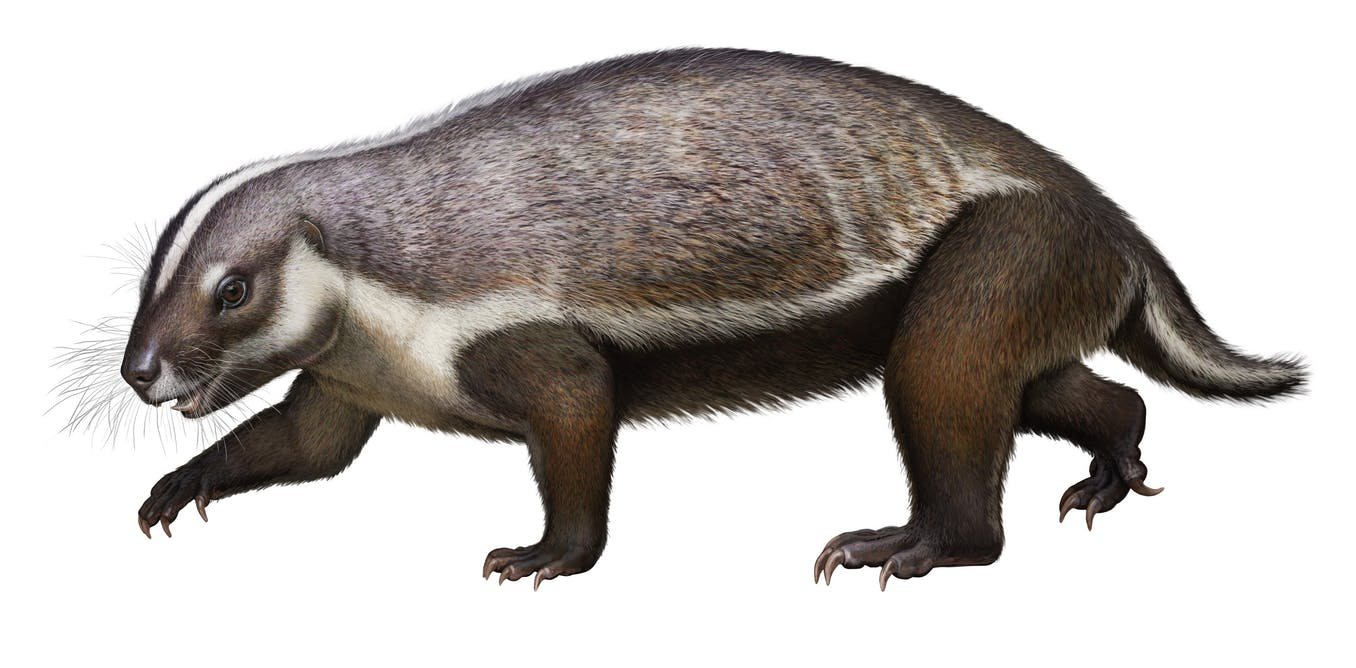 Say hello to the 'crazy beast' mammal who lived among the dinosaurs – The Conversation AU