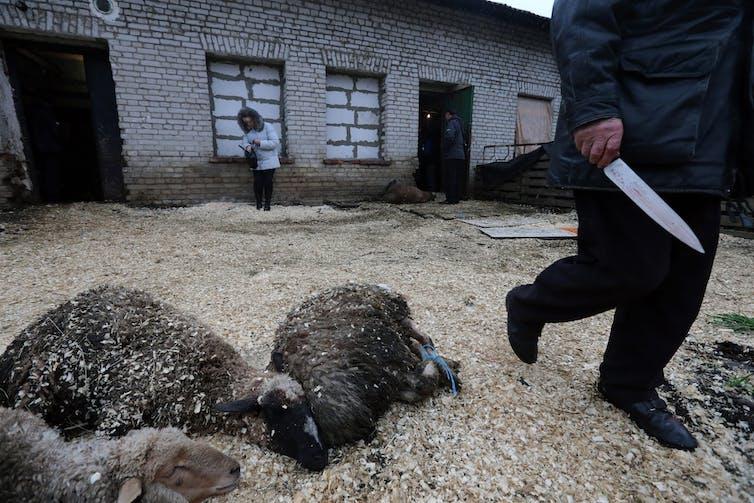 New findings show Australian sheep face dangerous heat stress on export ships