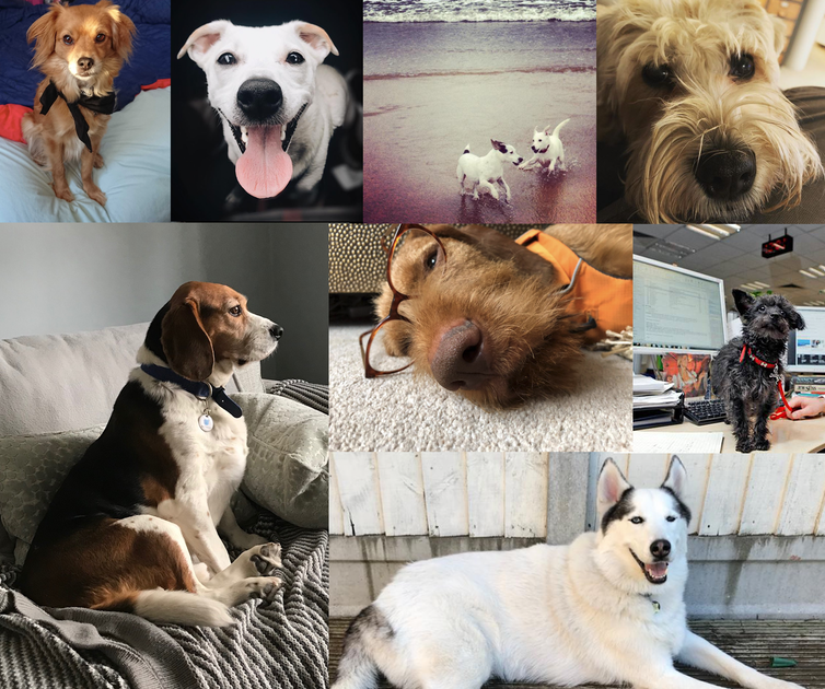 A compilation of dog photos. The dogs are large and small.