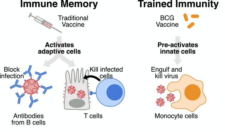 Could BCG, a 100-year-old vaccine for tuberculosis, protect against coronavirus?