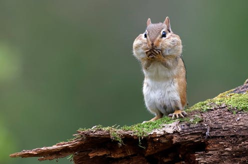 Ground But Squirrels Live In Trees
