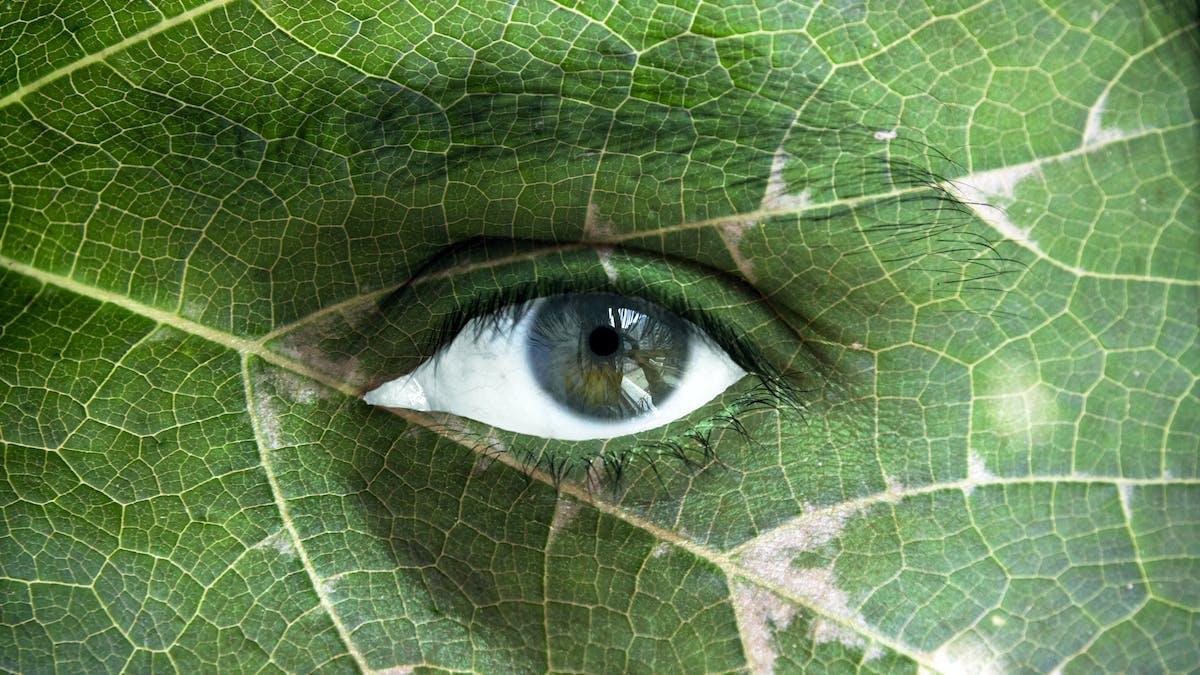 Día Internacional de la Biodiversidad: protegerla es invertir en salud