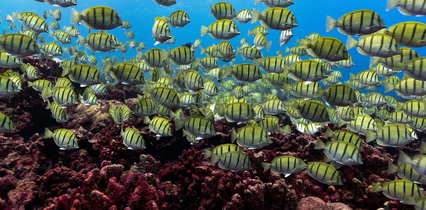 Marine heatwaves spell trouble for tropical reef fish — even before corals die