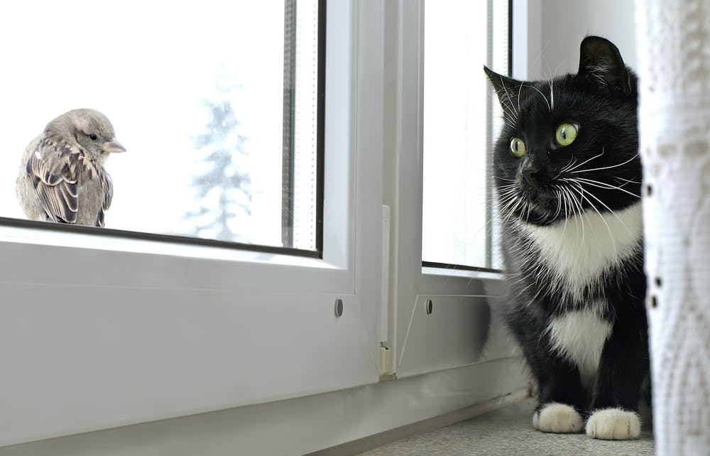 Don T Let Them Out 15 Ways To Keep Your Indoor Cat Happy
