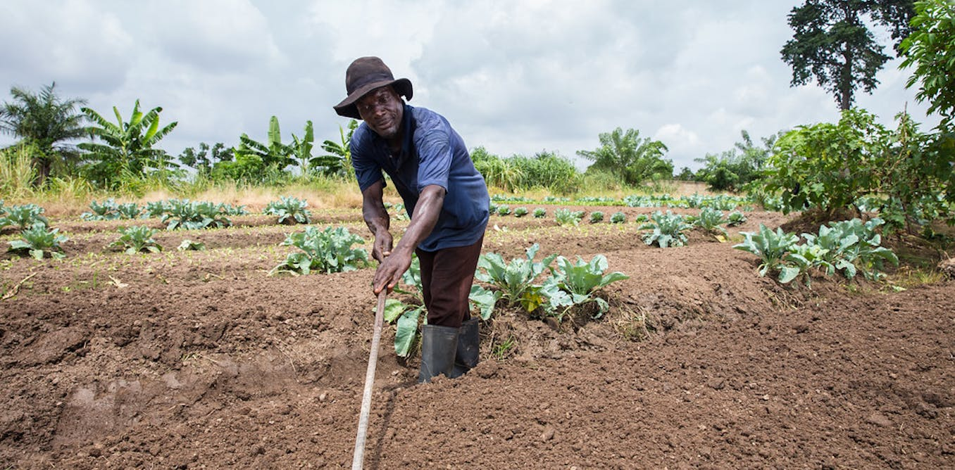 Urban spread is turning the lives of Ghanaian farmers upside down