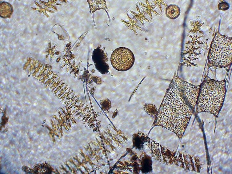 plankton dating