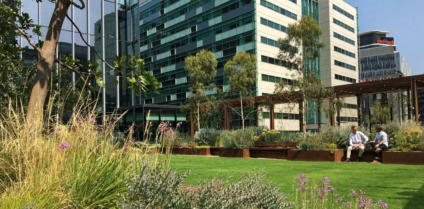 Greening our grey cities: heres how green roofs and walls can flourish in Australia