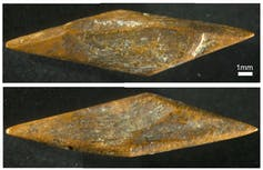 48,000-year-old arrowheads reveal early human innovation in the Sri Lankan rainforest