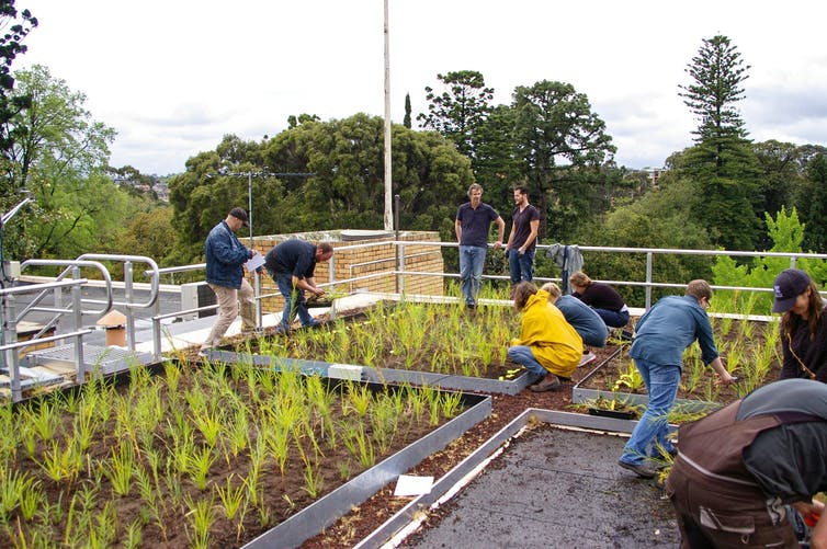 here's how green roofs and walls can flourish in Australia