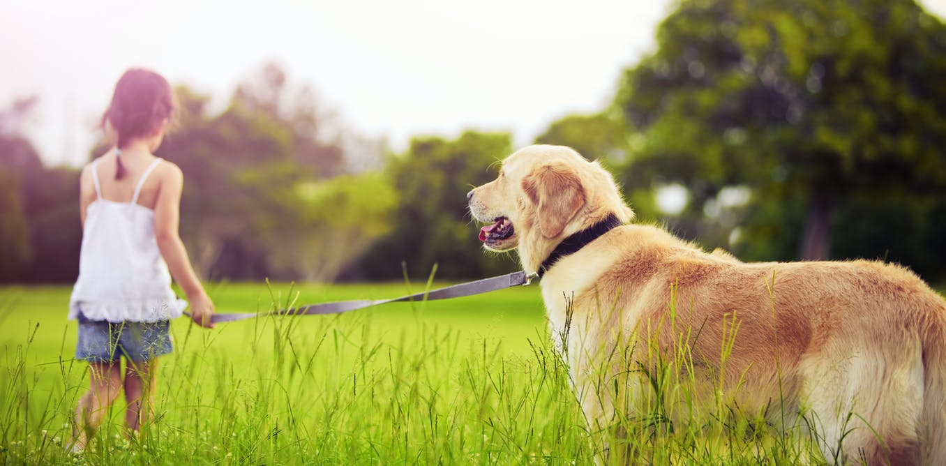 Curious kids: How far away can dogs smell and hear?