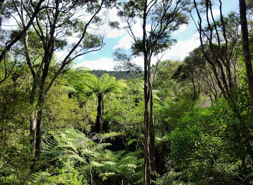 Planting non-native trees accelerates the release of carbon back into the atmosphere