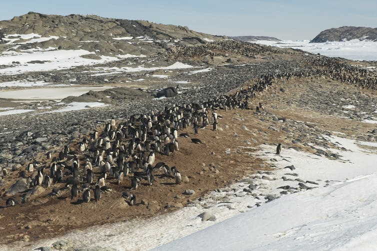 Australia wants to build a huge concrete runway in Antarctica. Here's why that's a bad idea