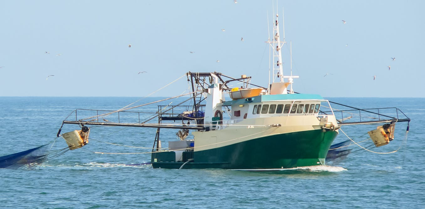 An El Niño hit this banana prawn fishery hard. Here's what we can learn from their experience
