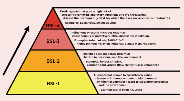 Pyramid with biosafety levels in yellow to red