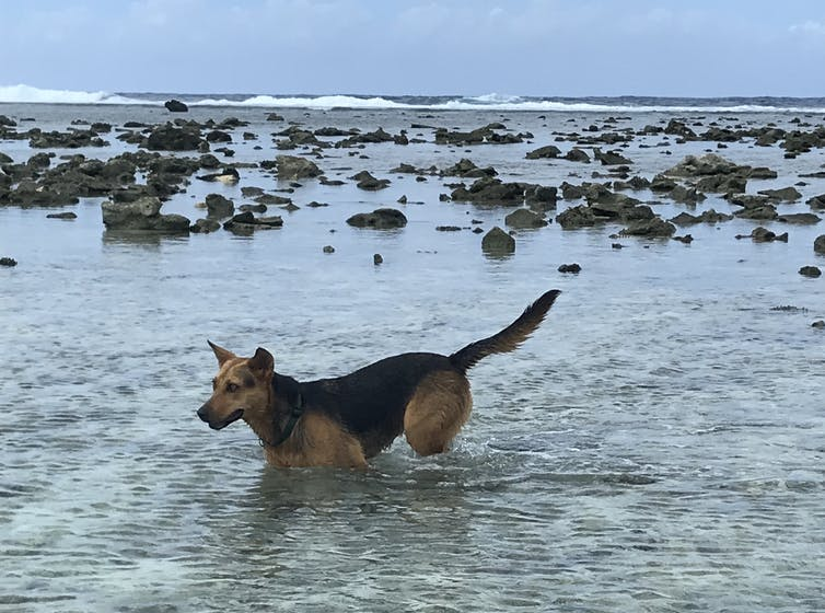 A dog wading through the sea on a rocky beach.