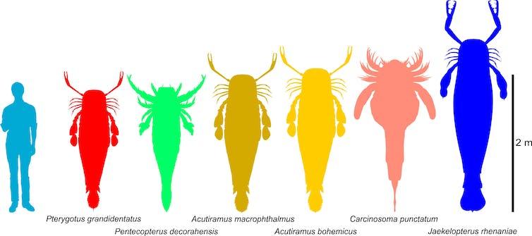 Giant sea scorpions were the underwater titans of prehistoric Australia
