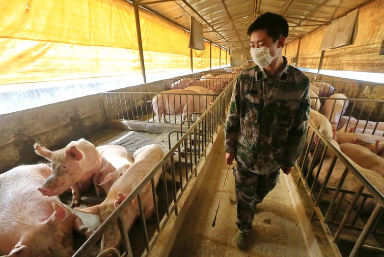 what to make of new H1N1 swine flu with 'pandemic potential' found in China