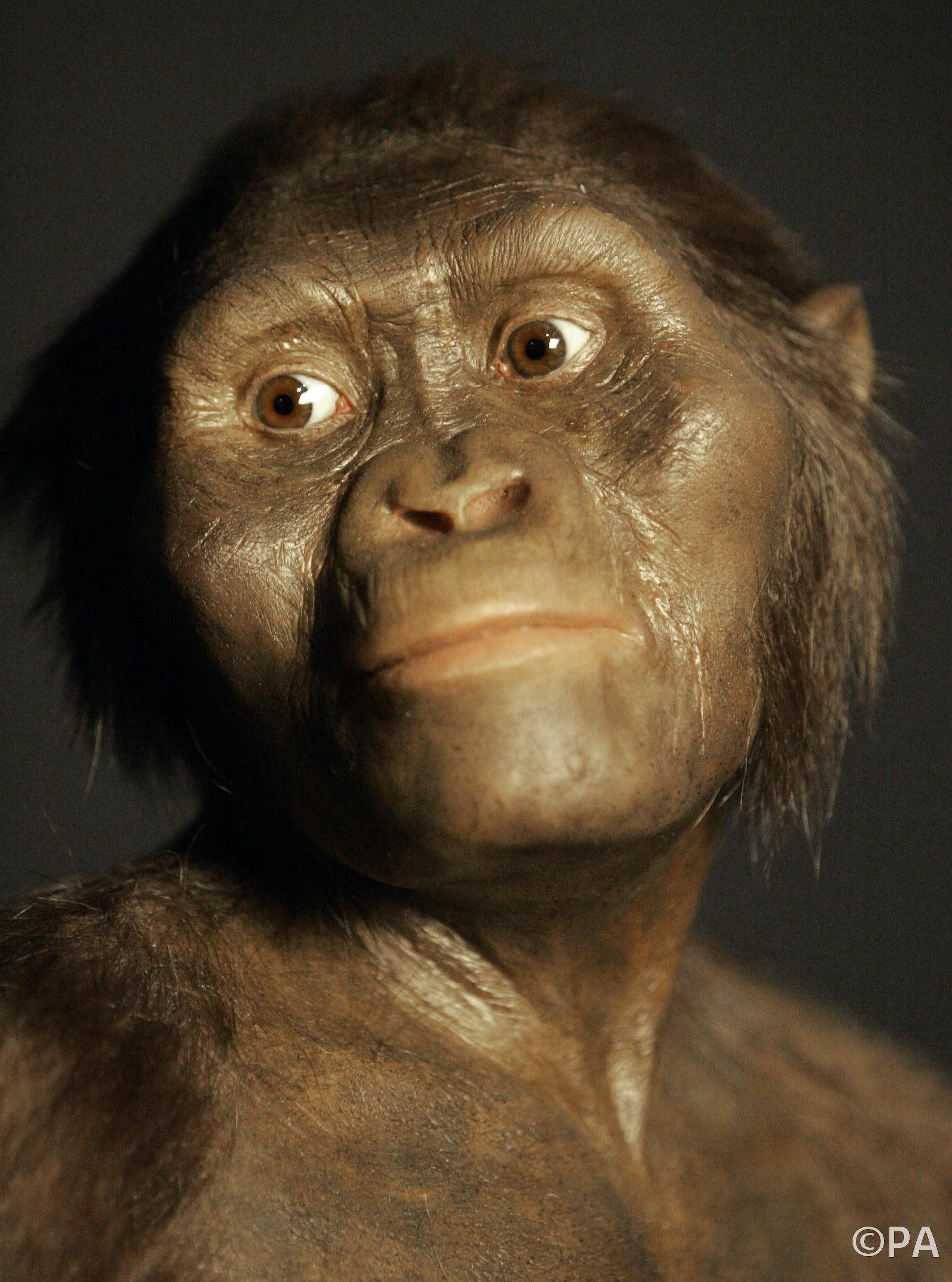 Sorry David Attenborough, we didn't evolve from 'aquatic ...