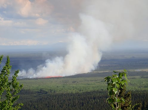 A white plume of smoke rises above a forested area in the boreal region.