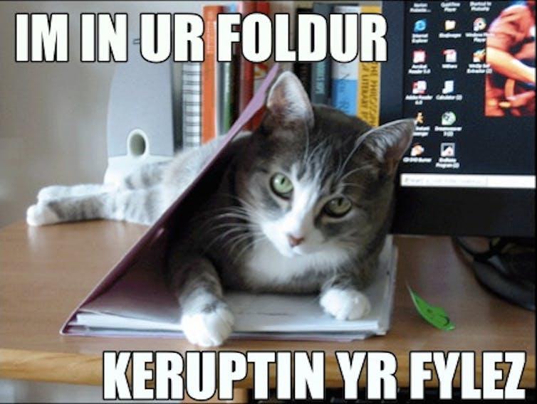 LOLcat meme reading: Im in ur foldur keruptin yr fylez