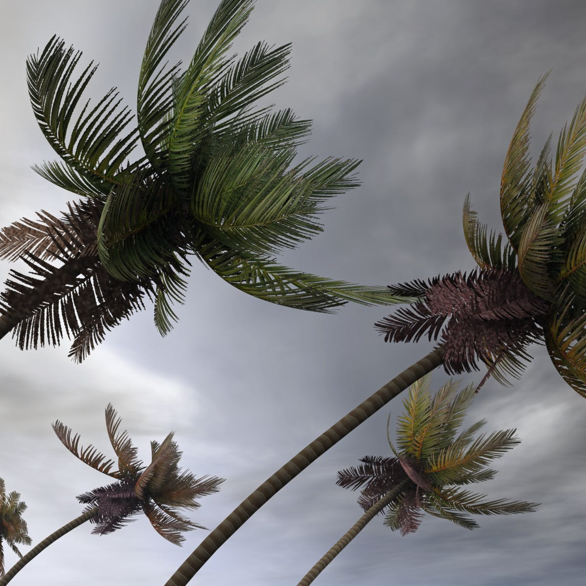 Storm Warning A New Long Range Tropical Cyclone Outlook Is Set To Reduce Disaster Risk For Pacific Island Communities