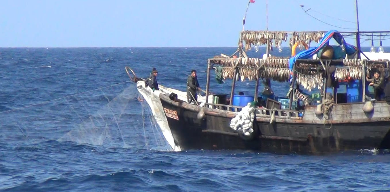 Chinese fishing boats took half a billion dollars of illegal squid from North Korea. Scientists used satellites to catch them out