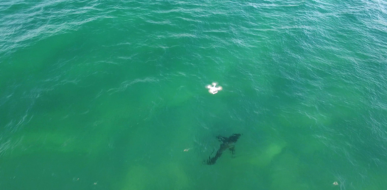 Lifeguards with drones keep us (and sharks) safe, and beach-goers agree