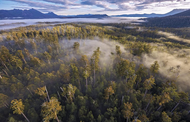 Aerial view of a Tasmanian forest