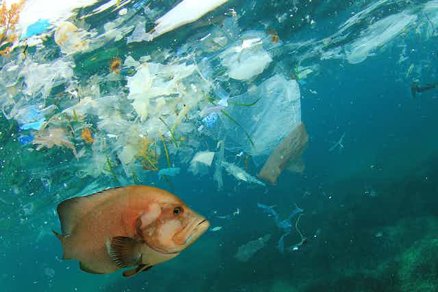 A tropical fish swims amid plastic waste in the ocean.