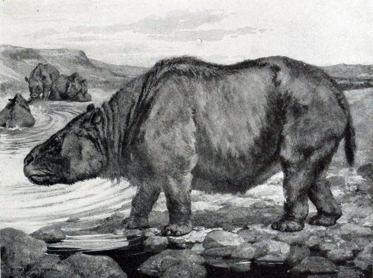 A toxodon – an extinct animal bigger than an elephant – grazes.