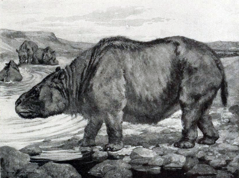 A toxodon - an extinct animal larger than an elephant - grazes.