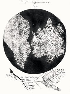 Original etching of cells from a piece of cork