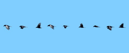 A row of images of a bird in flight