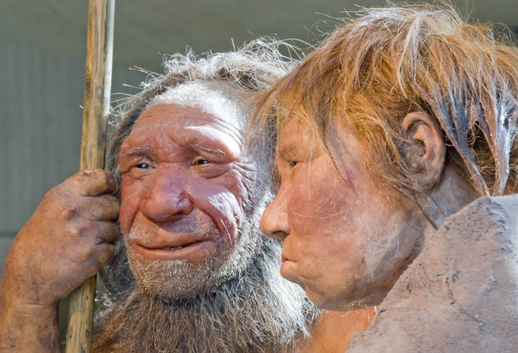 Curious Kids: how did the first person evolve?