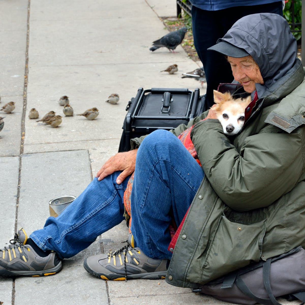 My Dog Is My Home The Need For Pet Friendly Accommodation For Homeless People