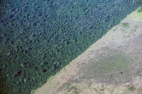 Aerial view of the  deforested edge of the Amazon rainforest
