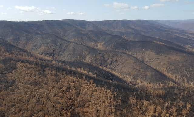 Landscape burnt by bushfire