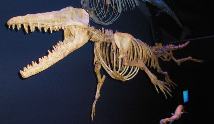 Skeleton of a four-legged creature.