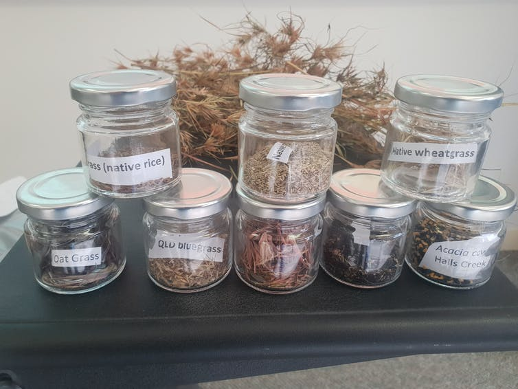 Collection of labelled jars containing grasses.