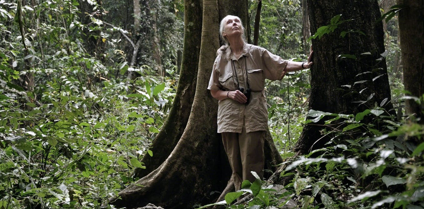 My talk with Jane Goodall: vegetarianism, animal welfare and the power of children's advocacy
