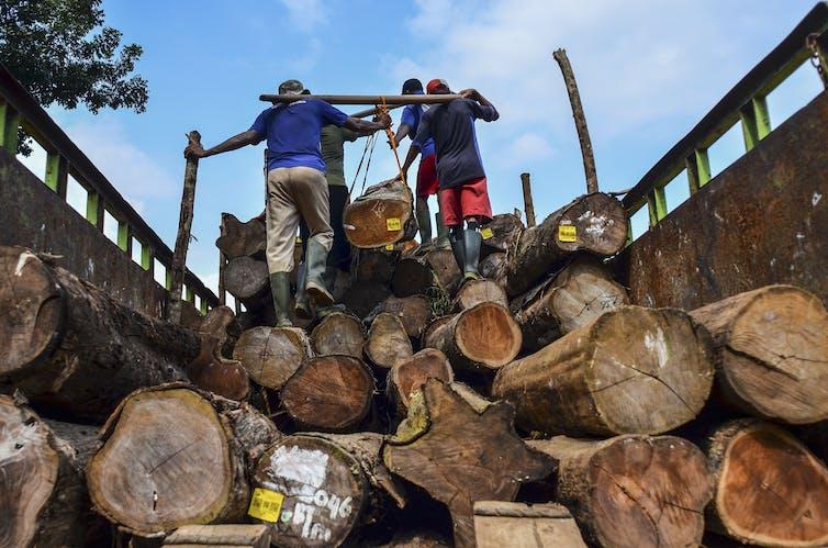 Dua orang pekerja naik di atas truk penuh balok-balok kayu.