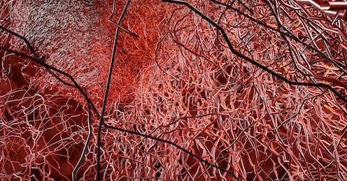 Recreación de vasos capilares en rojo, negro y blanco.