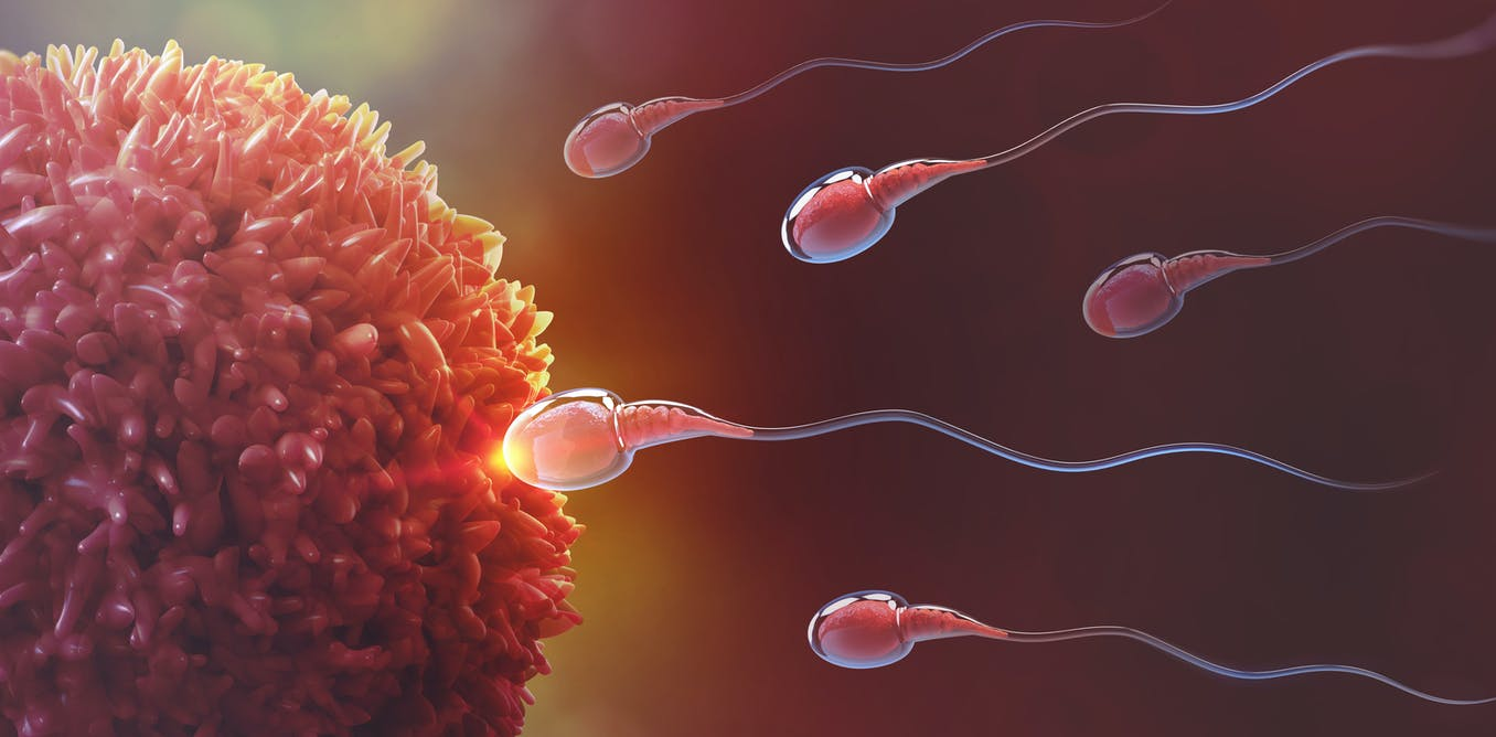 Sperm fooled scientists for 350 years – they spin not swim thumbnail