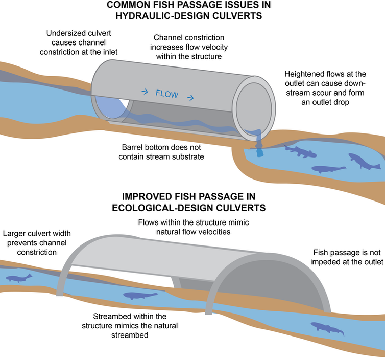 A diagram comparing a hydraulic culvert with an ecological design that allows fish to move freely upstream.