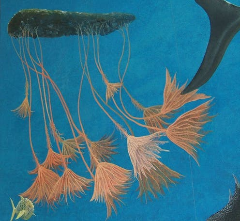 Crinoids growing underwater from raft