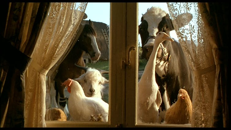 Farm animals look inside through a window.