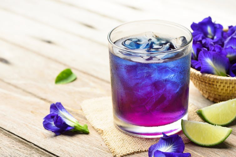A purple-blue tea in a glass, filled with ice, beside butterfly pea flowers.